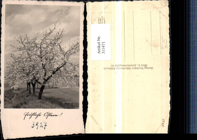 311471,Deutscher Schulverein 3927 Ostern Baumblüte Obstbäume günstig online kaufen