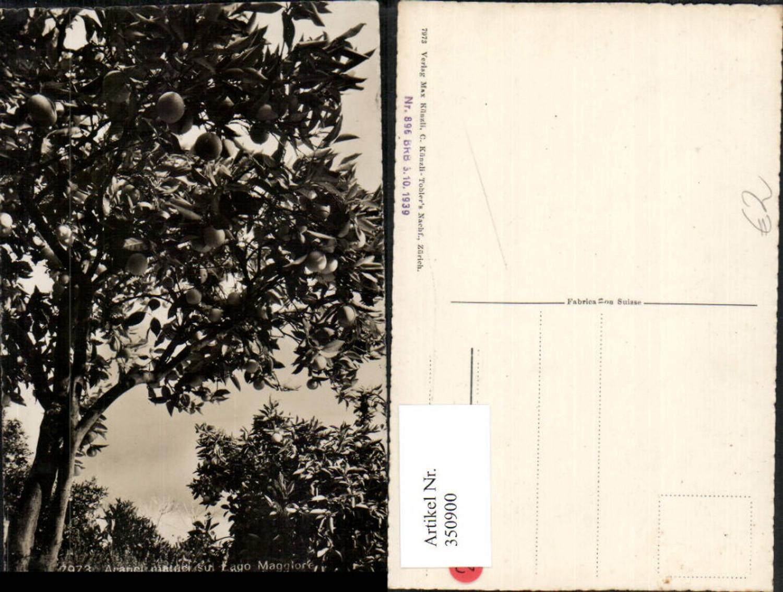 350900,Aranci maturi sul Lago Maggiore Orangenbaum Kt Tessin günstig online kaufen