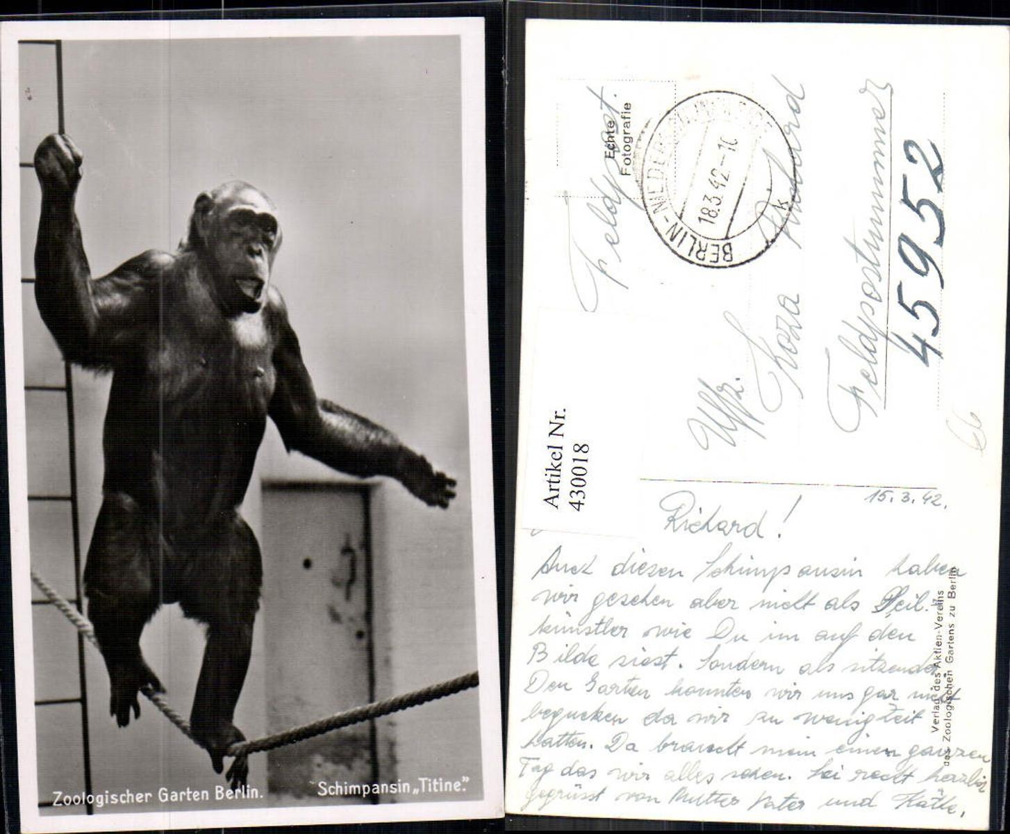 430018,Foto Ak Tiere Affe Zoologischer Garten Berlin Schimpansin Titine günstig online kaufen