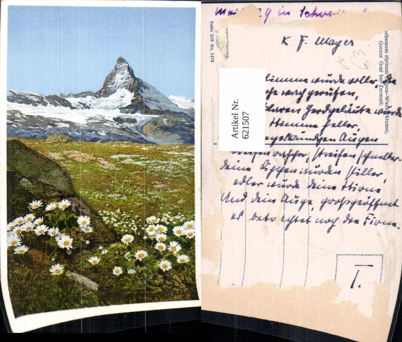 621507,Zermatt Matterhorn Blumen Alpen-Wucherblume i. Vordergrund pub Photochromie 578/1473 günstig online kaufen