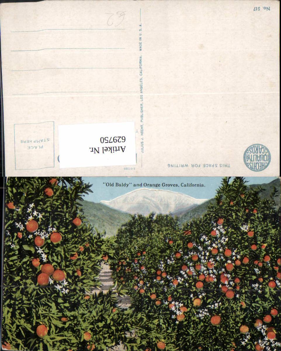 629750,Old Baldy and Orange Groves California günstig online kaufen