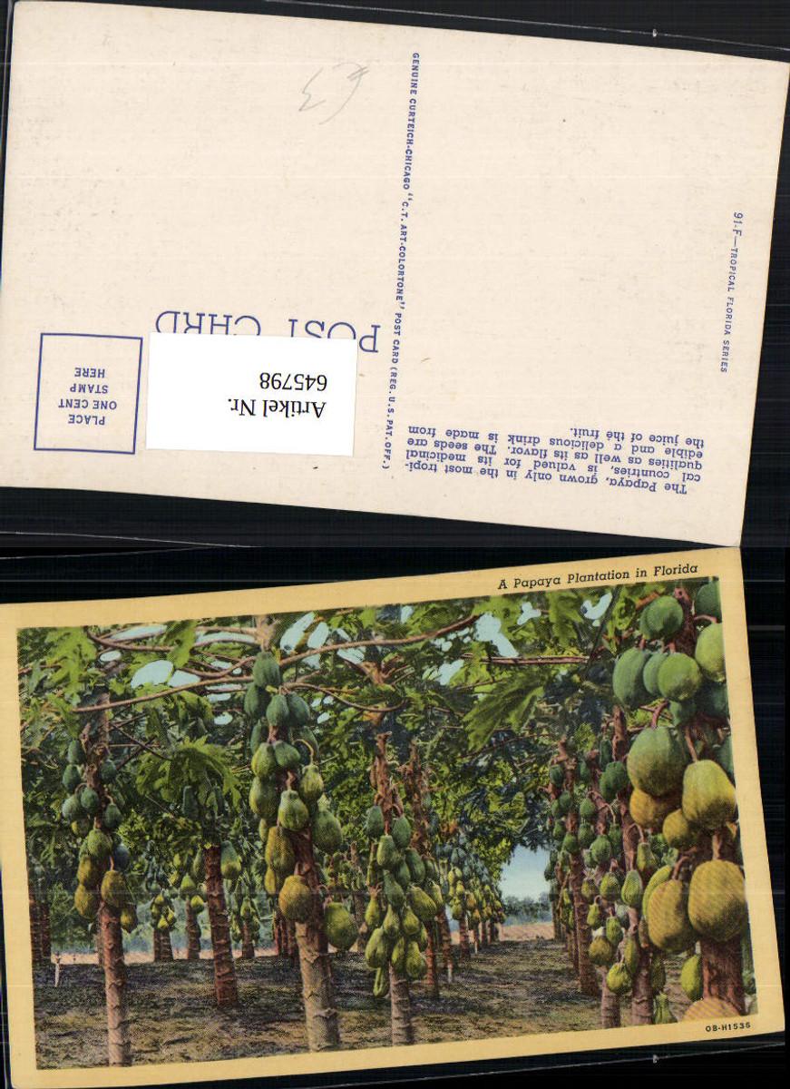 645798,Florida Papaya Plantation Plantage günstig online kaufen