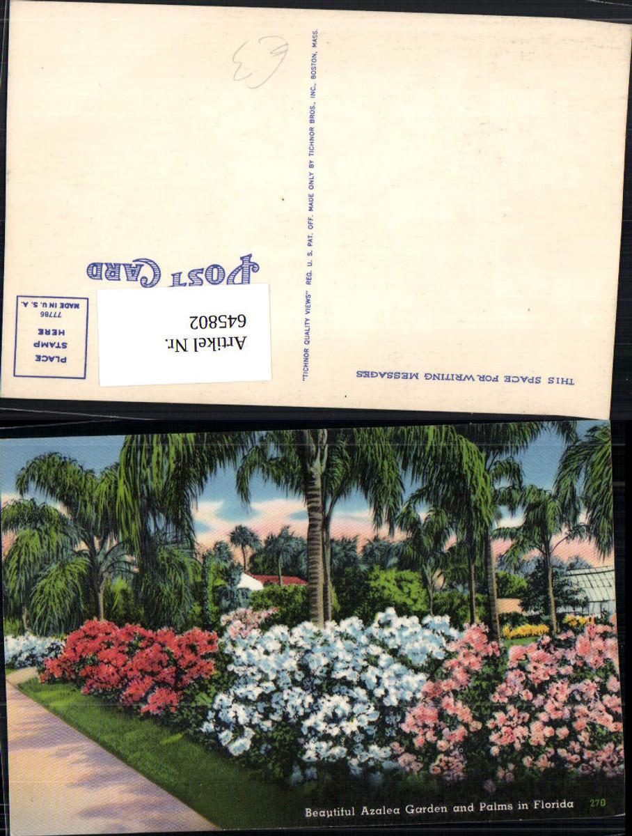 645802,Florida Beautiful Azalea Garden Palms Palmen günstig online kaufen