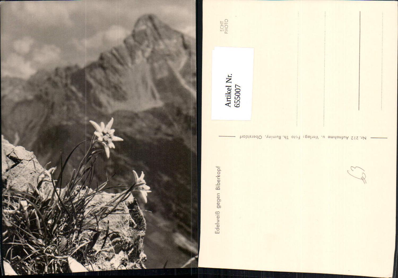 655007,Foto Ak Edelweiß geg. Biberkopf Blumen Vegetation günstig online kaufen
