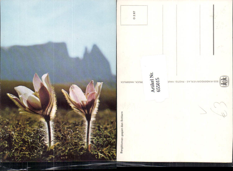 655015,Bergblumen geg. d. Schlern Blumen Vegetation pub SOS Kinderdorf O 2/67 günstig online kaufen