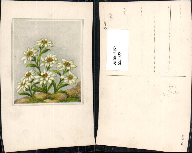655023,Künstler Ak Edelweiß Blumen Vegetation Passepartout günstig online kaufen