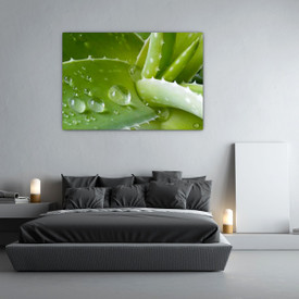 Glasbild Aloe