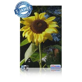 Infrarot Bildheizung Sonnenblume rahmenlos