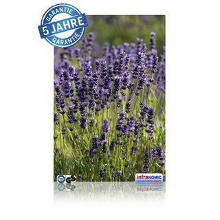 Infrarot Bildheizung Lavendel rahmenlos