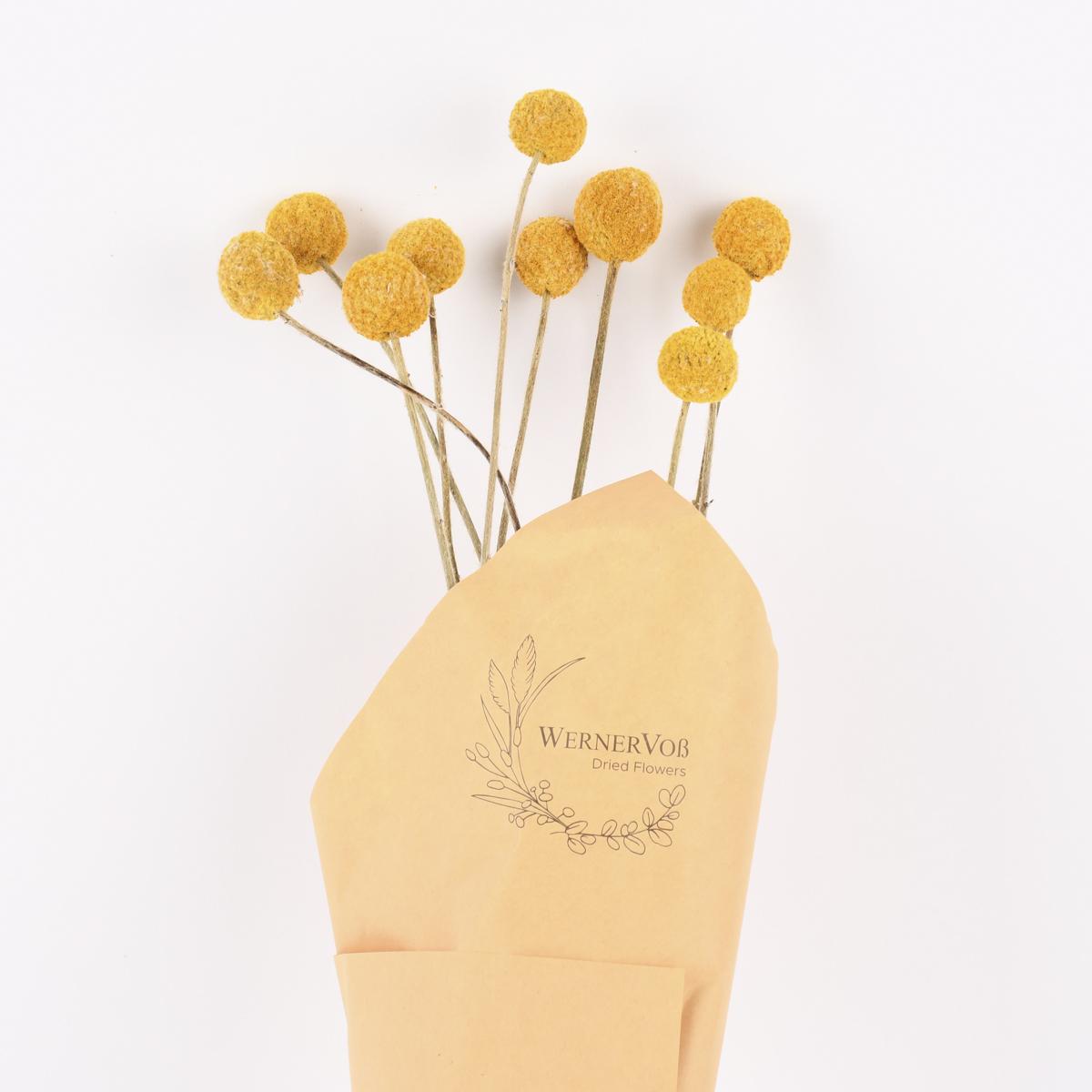 Trockenblume Trommelstöckchen gelb natur 50cm