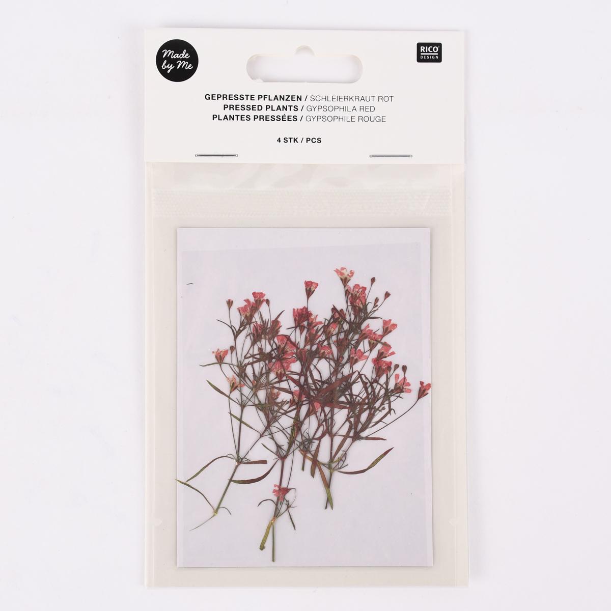 Rico Design Gepresste Pflanzen Schleierkraut 4 Stück rosa grün