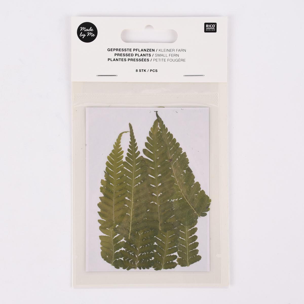 Rico Design Gepresste Pflanzen Kleiner Farn 8 Stück grün