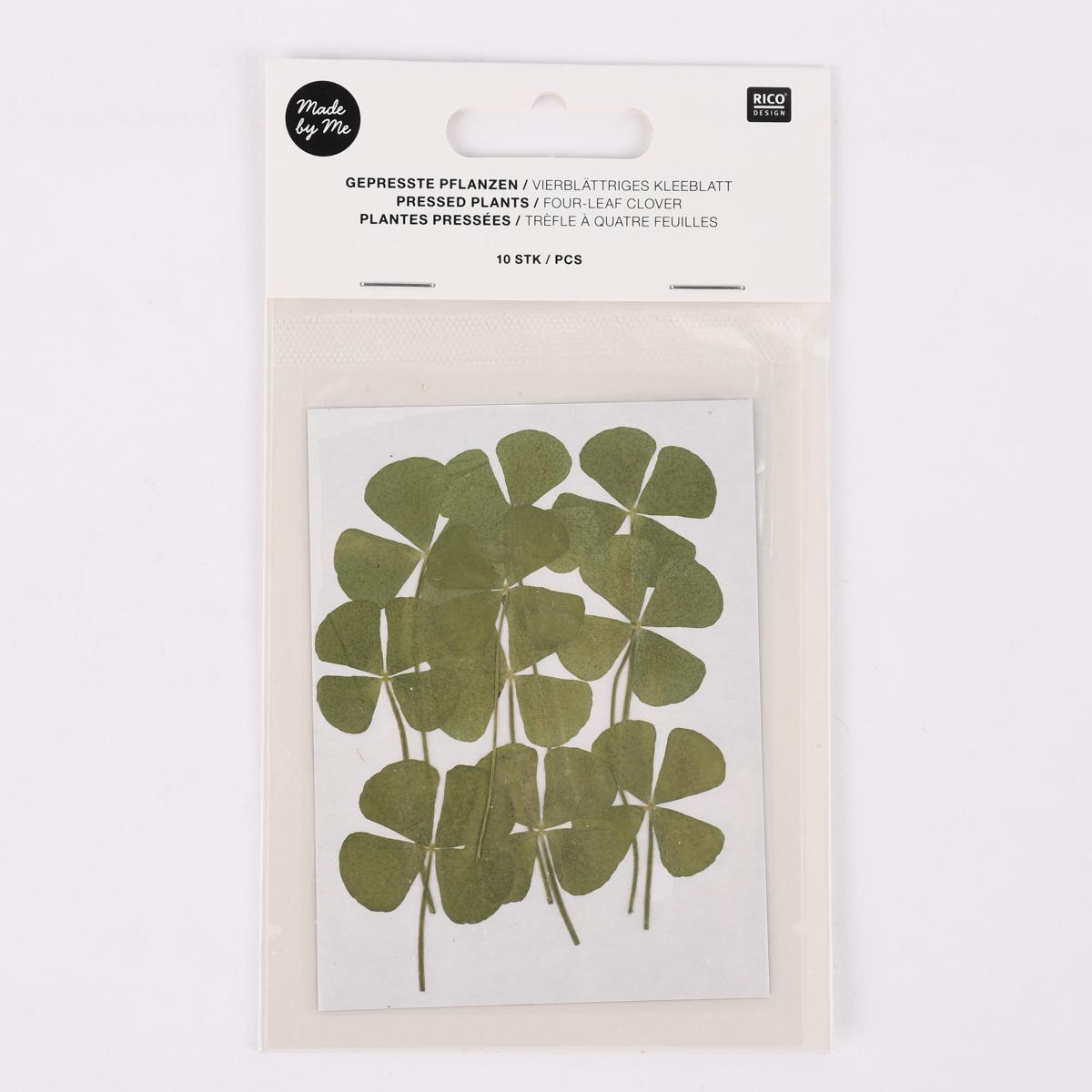 Rico Design Gepresste Pflanzen vierblättriges Kleeblatt 10 Stück grün