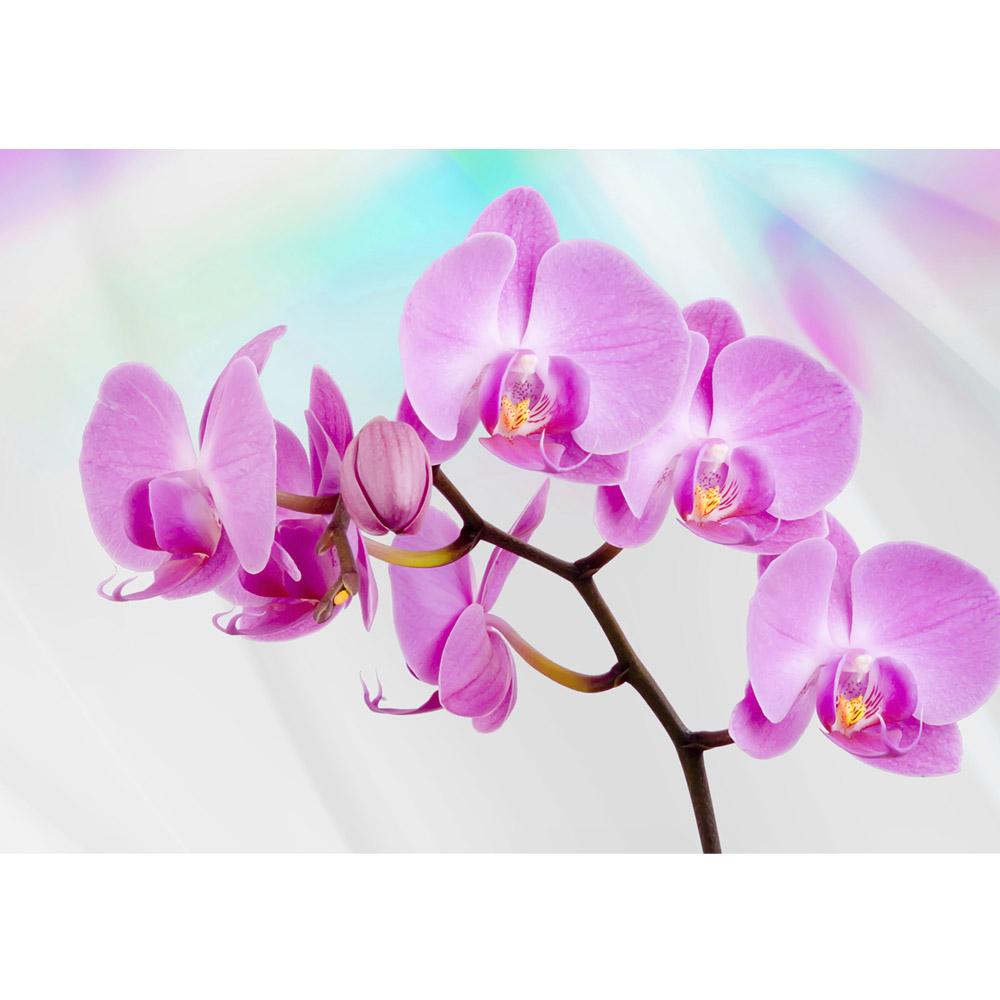 Fototapete no. 299   Vlies   Orchideen Tapete Orchidee Blüte Tuch Blume lila Motiv 0299