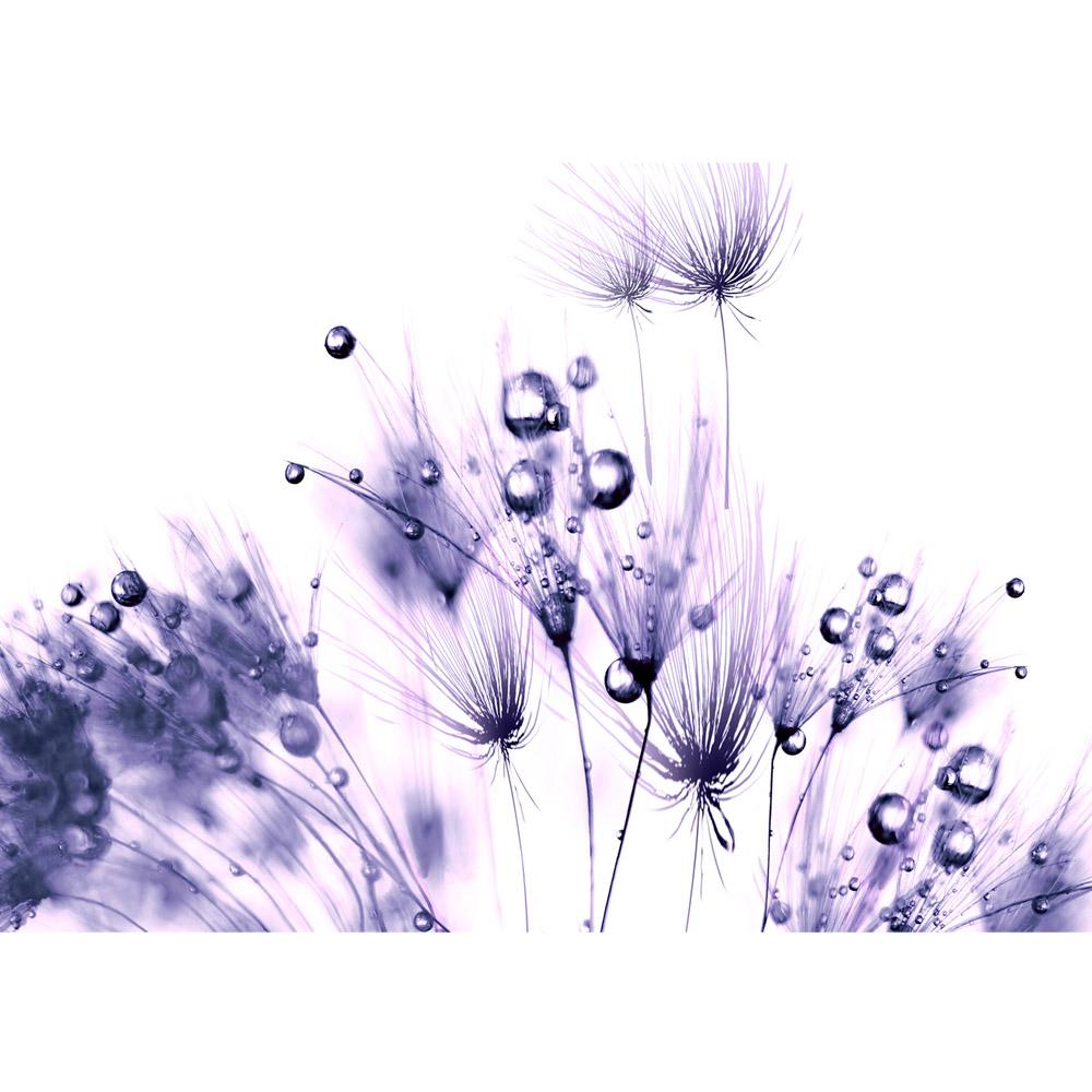 Fototapete no. 311 | Vlies | Pflanzen Tapete Pusteblume Tropfen lila Wasser Motiv 0311