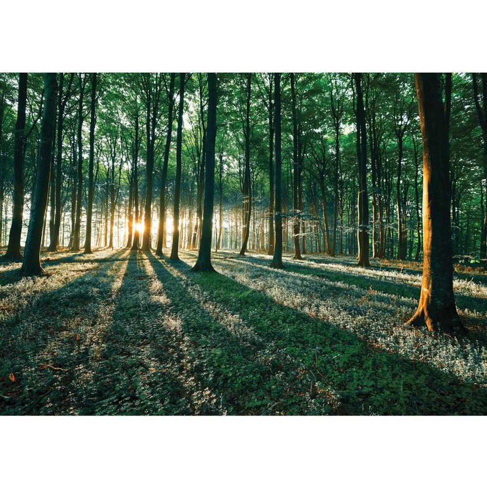 Fototapete no. 641 | Vlies | Wald Tapete Sonnenuntergang Bäume Wiese grün Motiv 0641