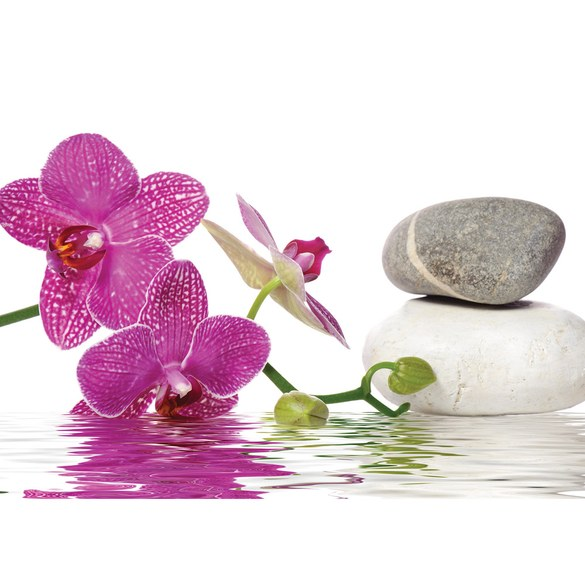 Mural no. 1306 | Non-woven or Paper | wellness wallpaper orchid water