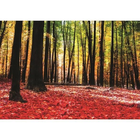Fototapete no. 1968 | Vlies | Wald Tapete Bäume Laub Herbst Steine Sonne Schatten Motiv 1968