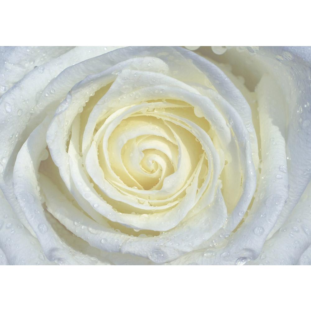 Fototapete no. 2066 | Vlies | Blumen Tapete Rose Blume Blüte Wassertropfen Motiv 2066