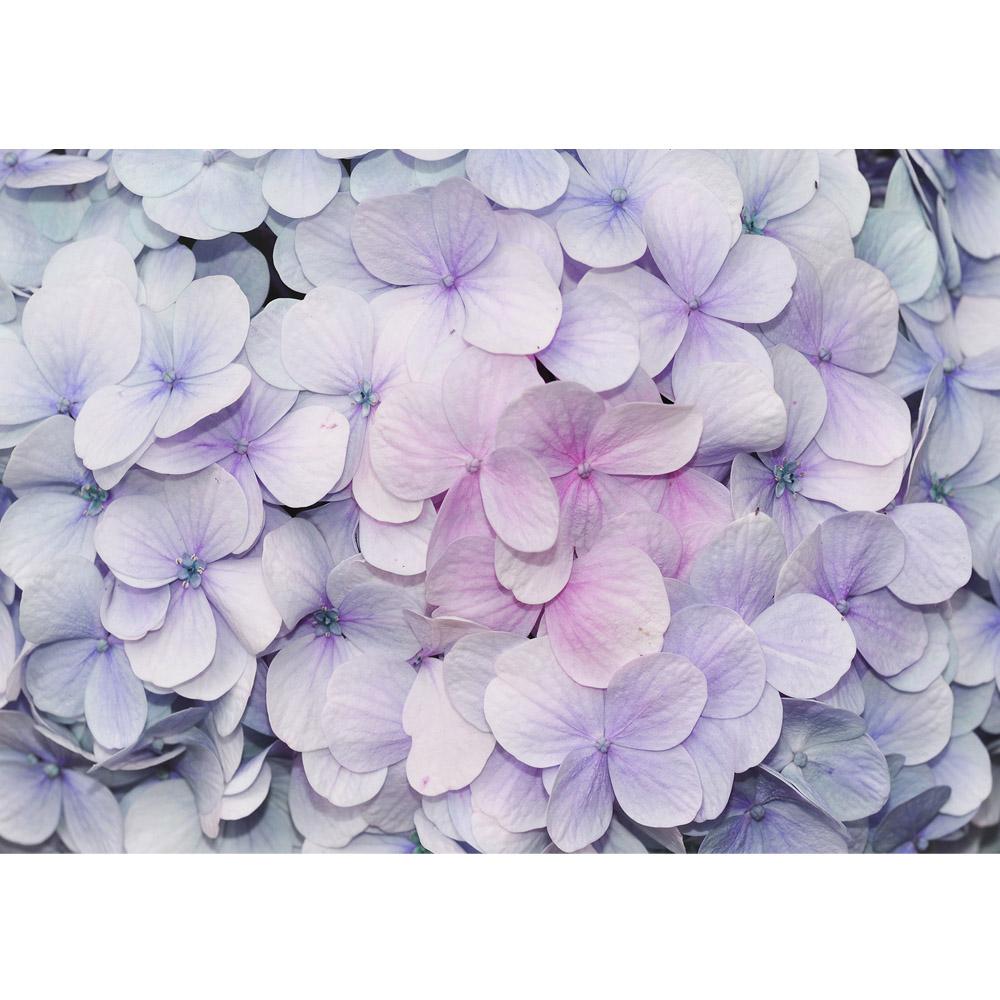 Fototapete no. 2273 | Vlies | Blumen Tapete Blüten Blätter Veilchen lila Motiv 2273