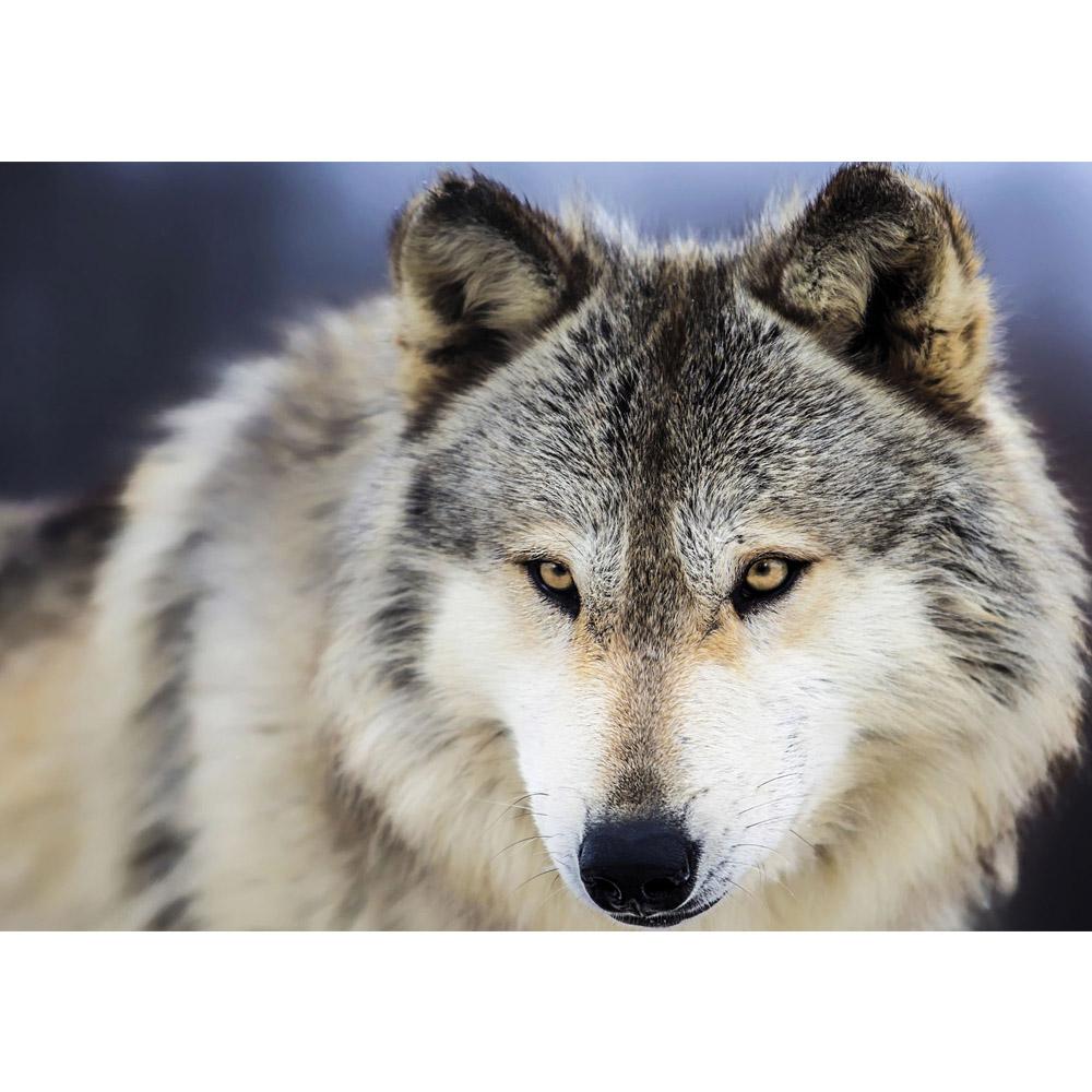 Fototapete no. 2959 | Vlies | Tiere Tapete Wolf Kopf Fell beige Motiv 2959