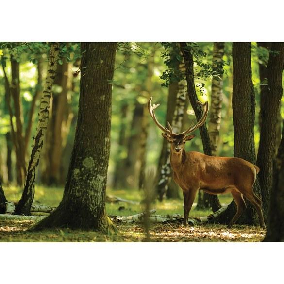 Mural no. 2996 | Non-woven or Paper | animals wallpaper deer animal fur