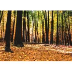 Fototapete no. 3007 | Vlies | Wald Tapete Bäume Blätter Herbst Laub orange Motiv 3007