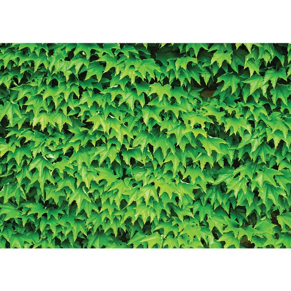 Mural no. 3074 | Non-woven or Paper | plants wallpaper leaves nature green