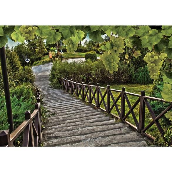 Fototapete no. 3092 | Vlies | Wein Tapete Weg Weintrauben grün Motiv 3092