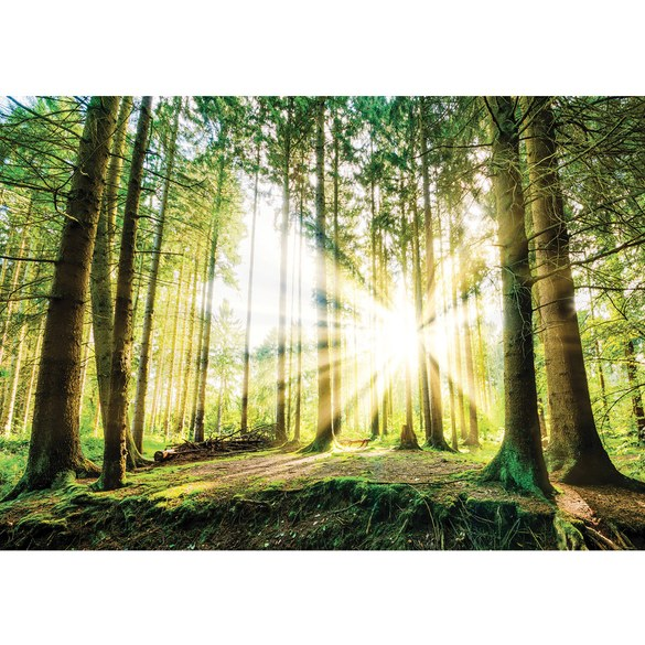 Mural no. 3256 | Non-woven or Paper | forest wallpaper coniferous forest