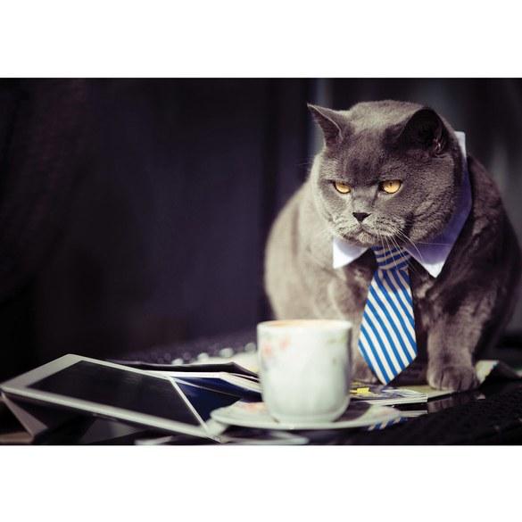 Mural no. 3307 | Non-woven or Paper | animals wallpaper cat siam tie necktie