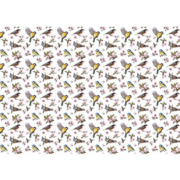Fototapete no. 3310 | Vlies | Tiere Tapete Meise, Kohlmeise, Stieglitz, Rotkelchen Motiv 3310