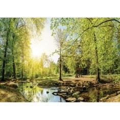 Fototapete no. 3350 | Vlies | Wald Tapete Laubwald, Bach, Steine, Wanderung Motiv 3350