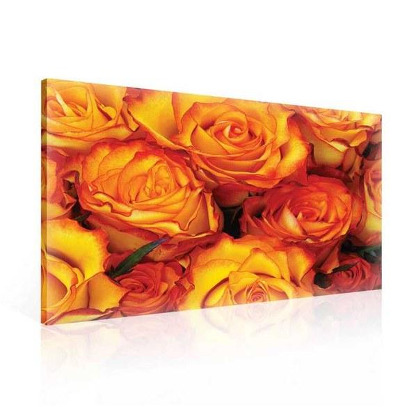 Leinwandbild Leuchtende Rosenblüten - Komplettpaket inkl. Rahmen und Aufhängung