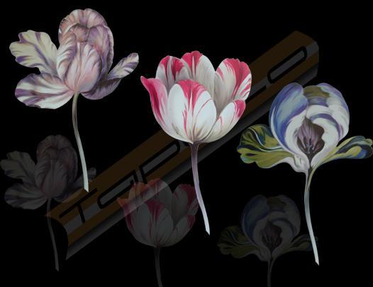 6773 Tulipan mix Ulf Moritz - SCALA Wandsticker, Dekor: Blumen,Sticker,Wandsticker