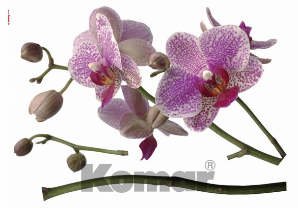 1-7702 Orchis wall sticker