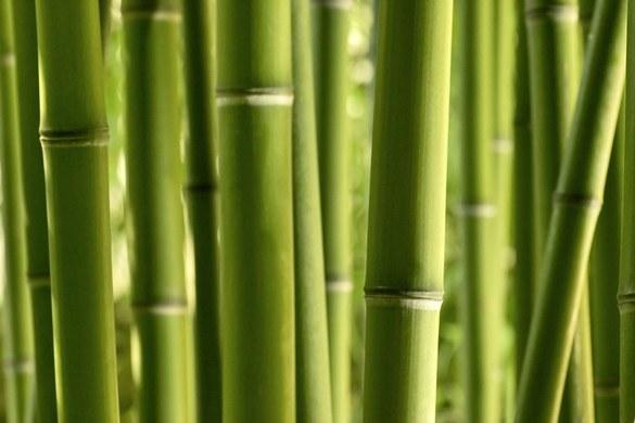 0310-5 Wandbild - Motiv: Bambus