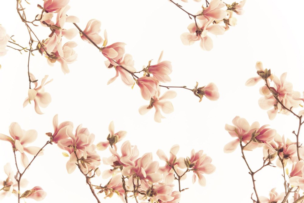0362-6 Wandbild - Motiv: Lachsfarbene Blüten
