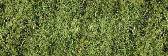 47-140 Wandbild - Motiv: Grasnarbe