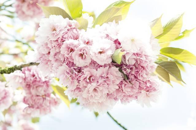47-143 Wandbild - Motiv: Frühling