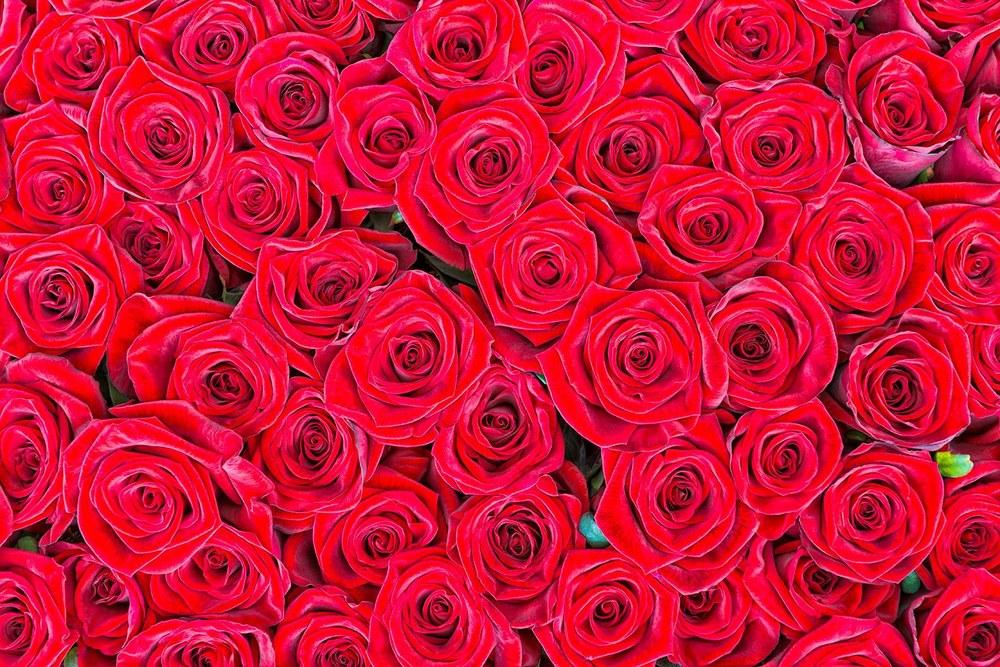 47-357 Wandbild - Motiv: Rote Rosen