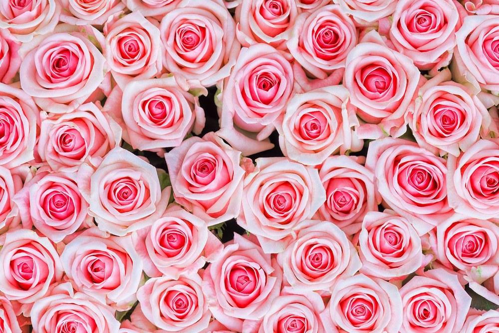 47-359 Wandbild - Motiv: Rosa Rosen