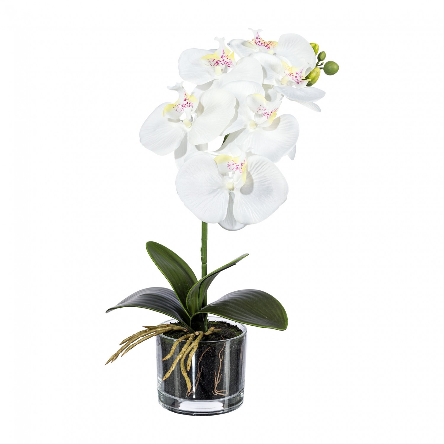 orchidee phalaenopsis kunstpflanze 40 cm in weiss im glas kunstpflanzen bl hende pflanzen. Black Bedroom Furniture Sets. Home Design Ideas