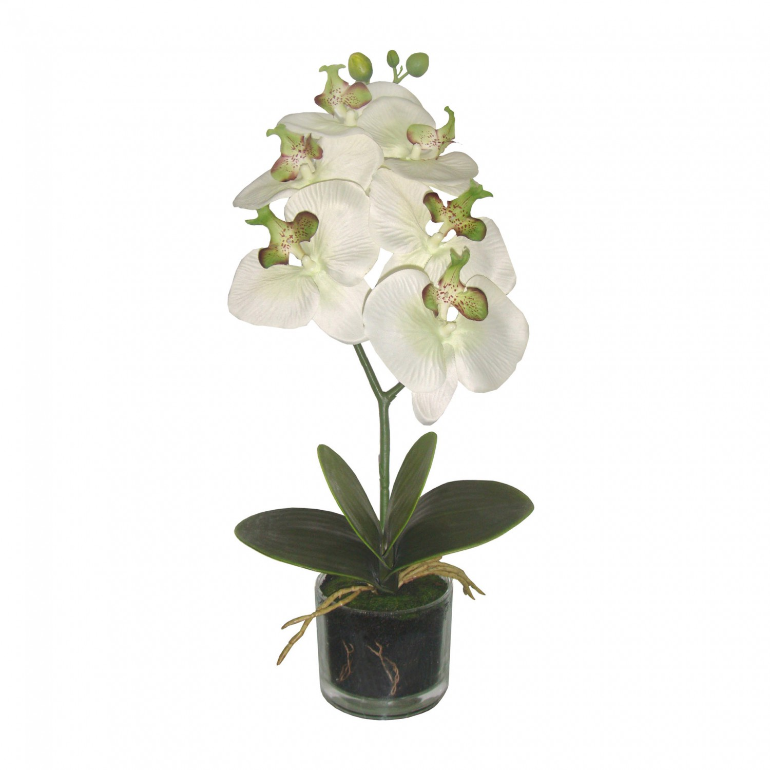 orchidee phalaenopsis kunstpflanze 40 cm in creme gr n im glas kunstpflanzen bl hende pflanzen. Black Bedroom Furniture Sets. Home Design Ideas