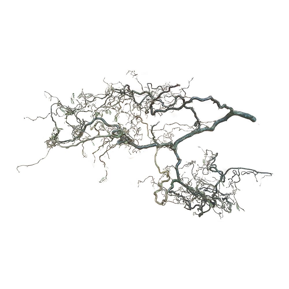Korkenzieherhasel-Zweige