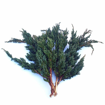 Juniperus-Zweige ca. 40 cm (5 St.)