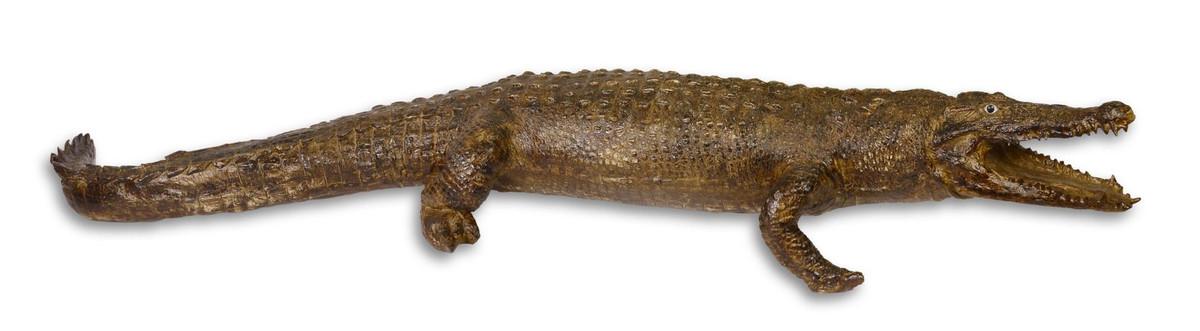 Casa Padrino Polyresin Krokodil Figur Grün / Braun 230 Cm   Luxus Wohnzimmer  Kunstharz Deko