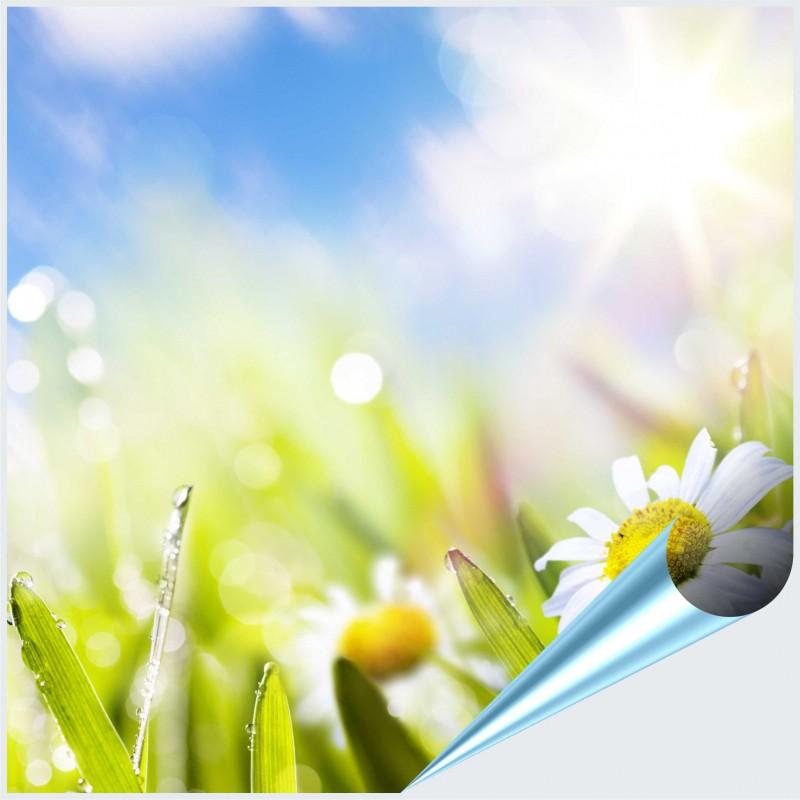 Fliesenaufkleber Motiv Frühlingsblumen 20x20 cm – Bild 1
