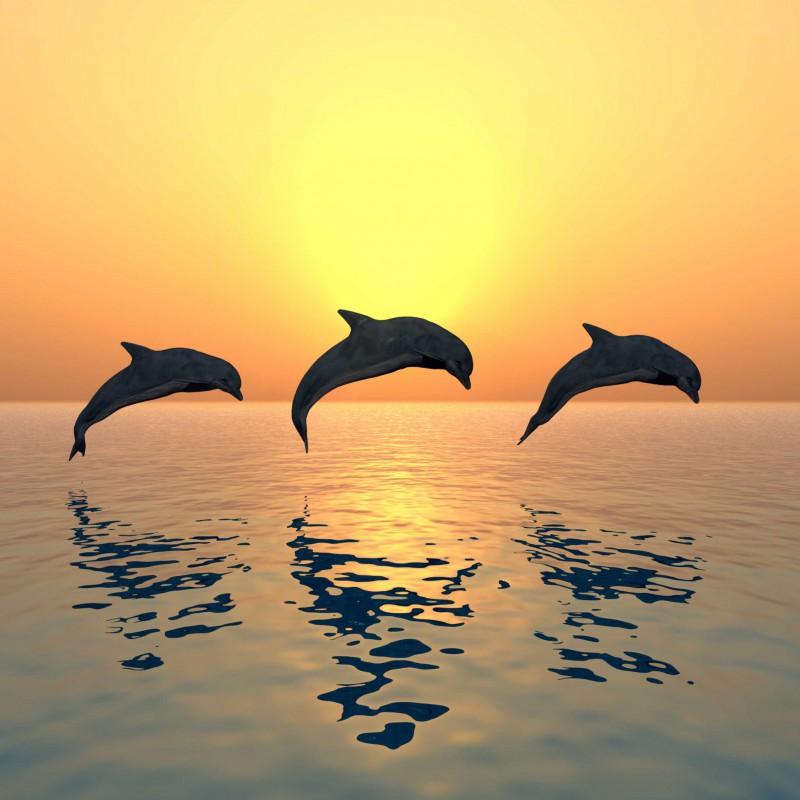Fliesenaufkleber Motiv Jumping Dolphins 10x10 cm – Bild 2
