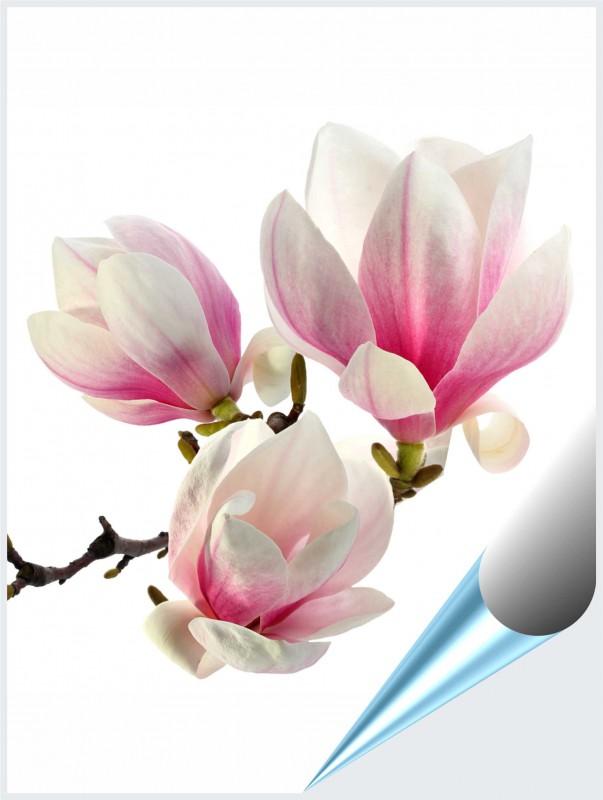 Fliesenaufkleber Motiv Magnolie 15x20 cm – Bild 1